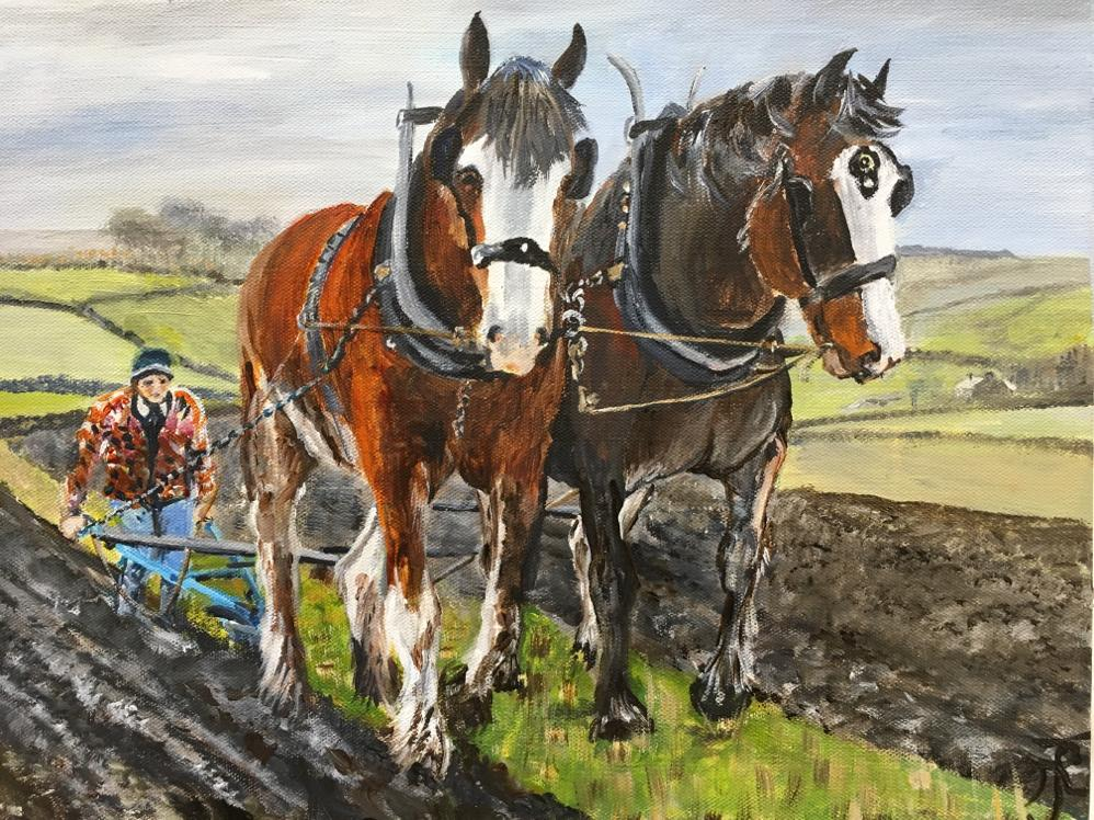 Clydesdale ploughing