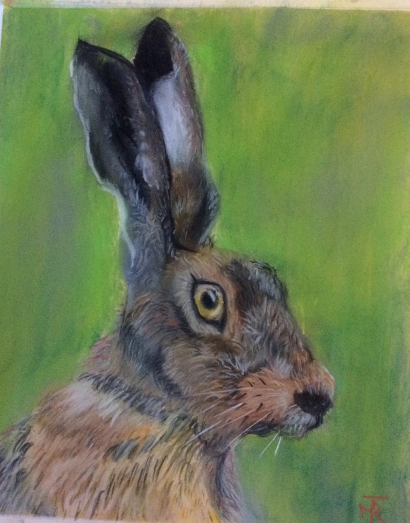 Startled Hare