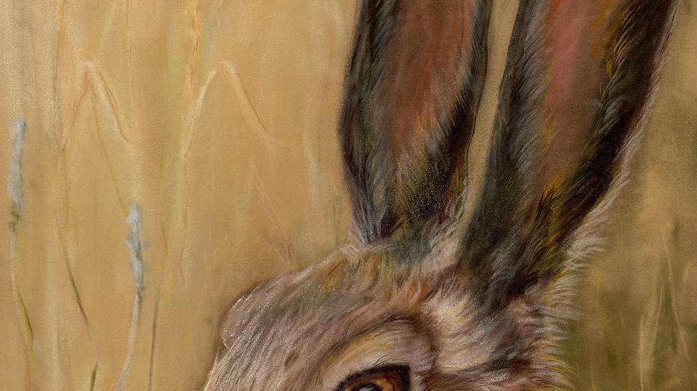 Brown Hare- Card