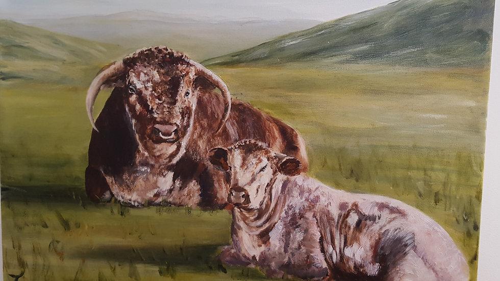 Longhorns of Logie Steading-Painting