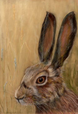 Brown hare- (Prints only)