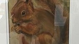 Red Squirrel- Painting
