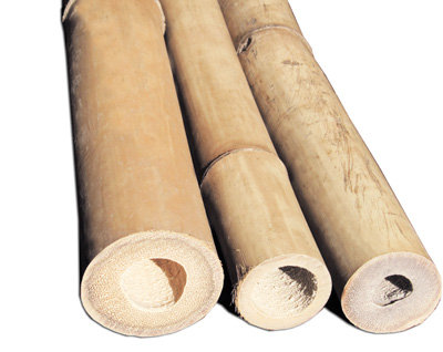 8ft (2.44m) 20-25mm diameter natural Tonkin bamboo canes. 10 cane pack