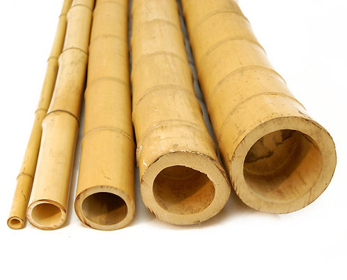 10ft (3.05m) 55-70mm diameter natural moso bamboo poles. 5 poles per pack.