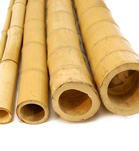 Bamboo poles united kingdom canes