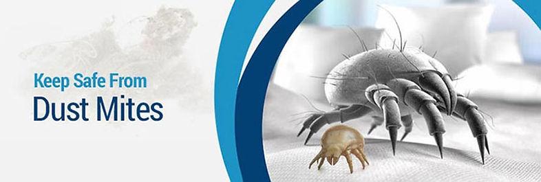 dust-mites.jpg