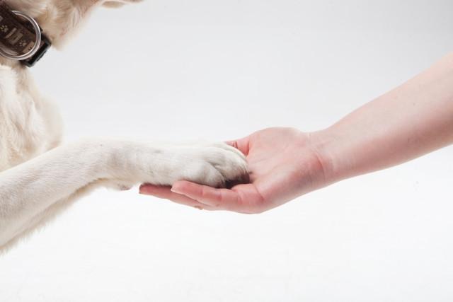 犬の躾について