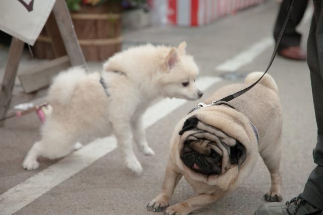 犬の散歩中の悩み