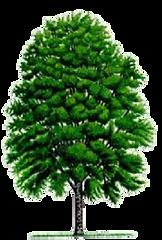 広葉樹の薪.png