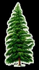 針葉樹の薪.png