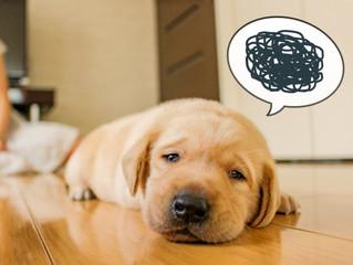 犬の機嫌がいい悪いには必ず理由があります
