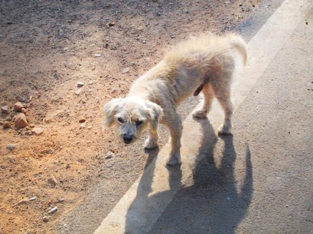 シニア犬の病気