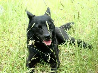 「いつもと違う」に早く気付けば助けることができた愛犬