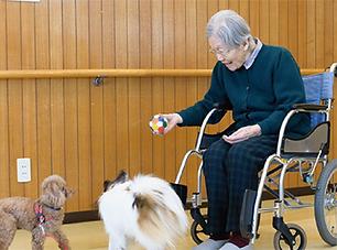愛犬と入居できる高齢者施設