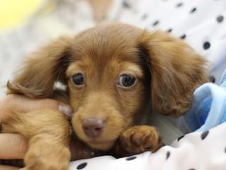 犬を室内で飼うことは飼い主である人間にもメリットがたくさん