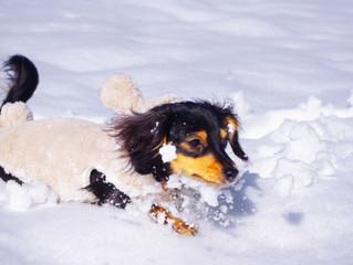 愛犬の寒さ対策!ブルブル震えることなく冬を越すために