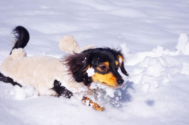 犬の寒さ対策