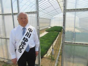 町議会議員時代に取り組んだネギ栽培を見てきました。