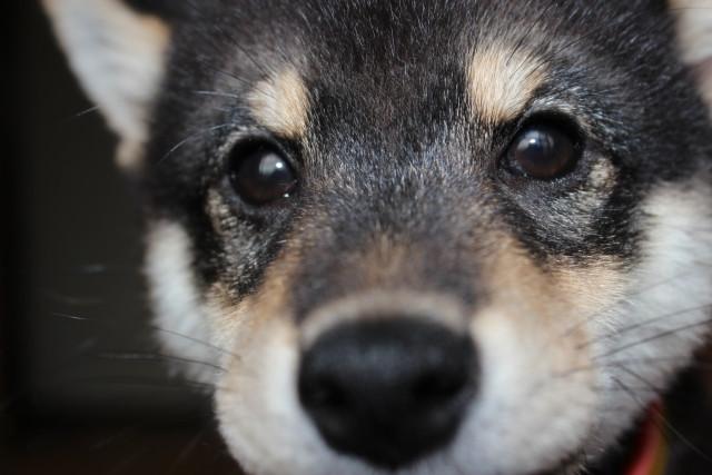 捨て犬を保護するためには寄付金が必要