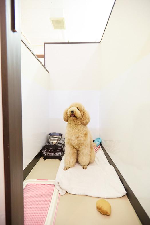 港区 ペットホテル 安い VIP ケージレス 港区ペットホテルキャンペーン 老犬 高齢犬 シニア犬