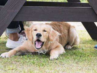 犬が吠えるのはどんなとき?吠え方と犬の気持ち