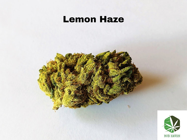 Lemon Haze (Sativa) {$130/oz}