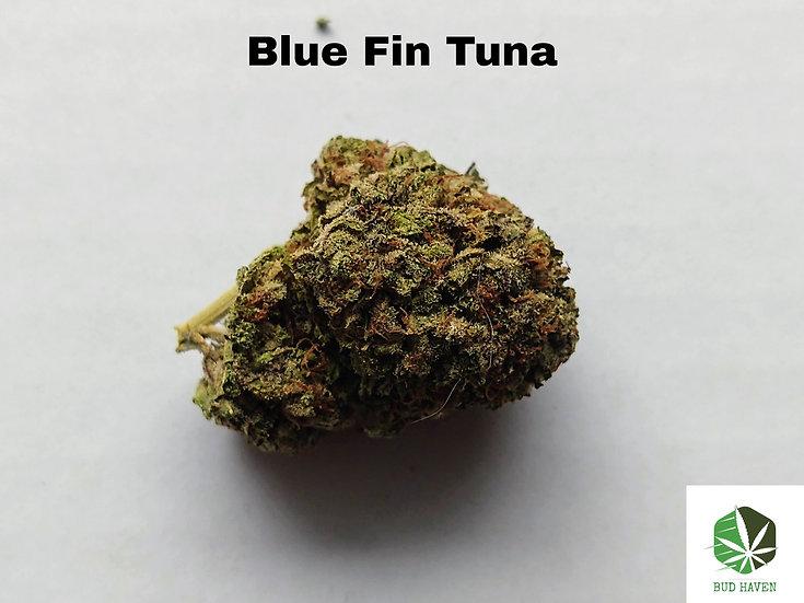 BLUE FIN TUNA (Indica) {$210/oz}