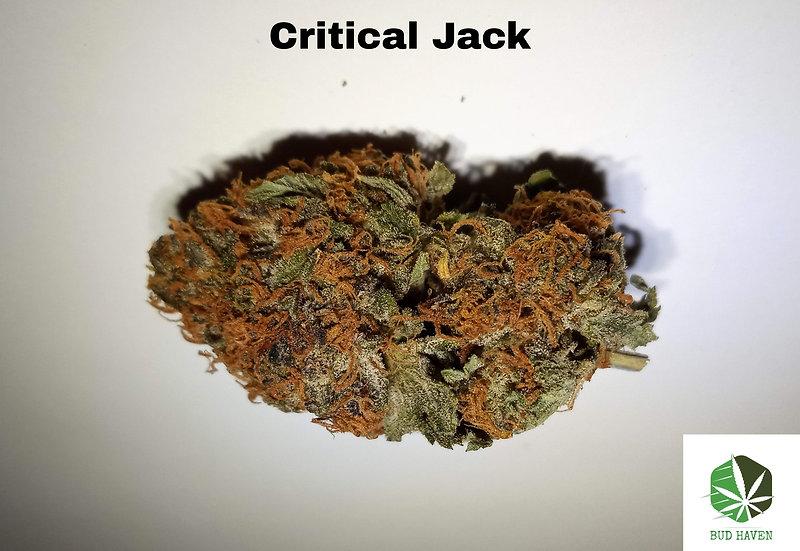 CRITICAL JACK (Hybrid) {$150/oz}