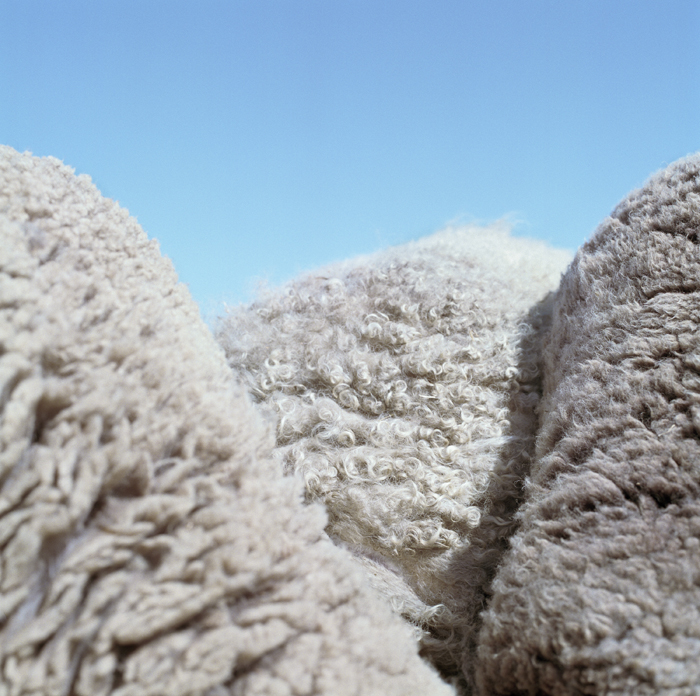 Sheep Mountains