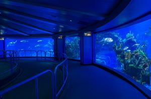An aquarium tank at Disney World