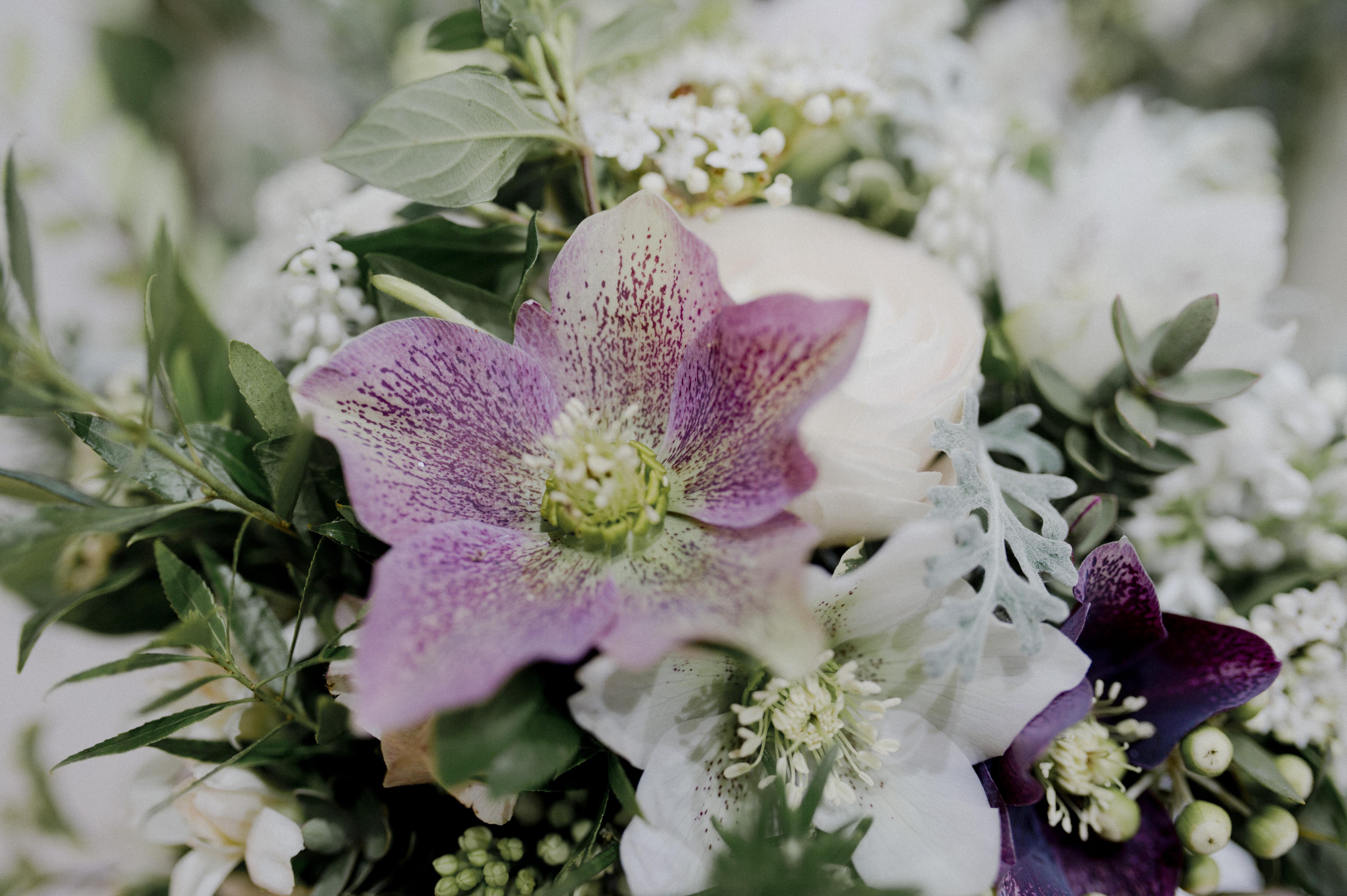 solveigetronanphotographesloveectteagardenflowers_10.JPG