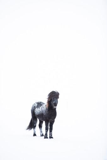 Niebla y Nieve. Caballo negro, Islandia