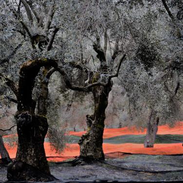 'One  Day in the Field' by Liz Rekve