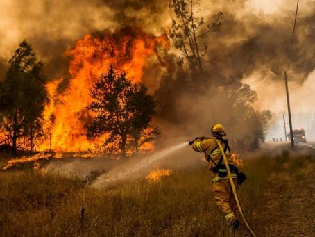 Лесные пожары: мифы и реальность. Онлайн-беседа