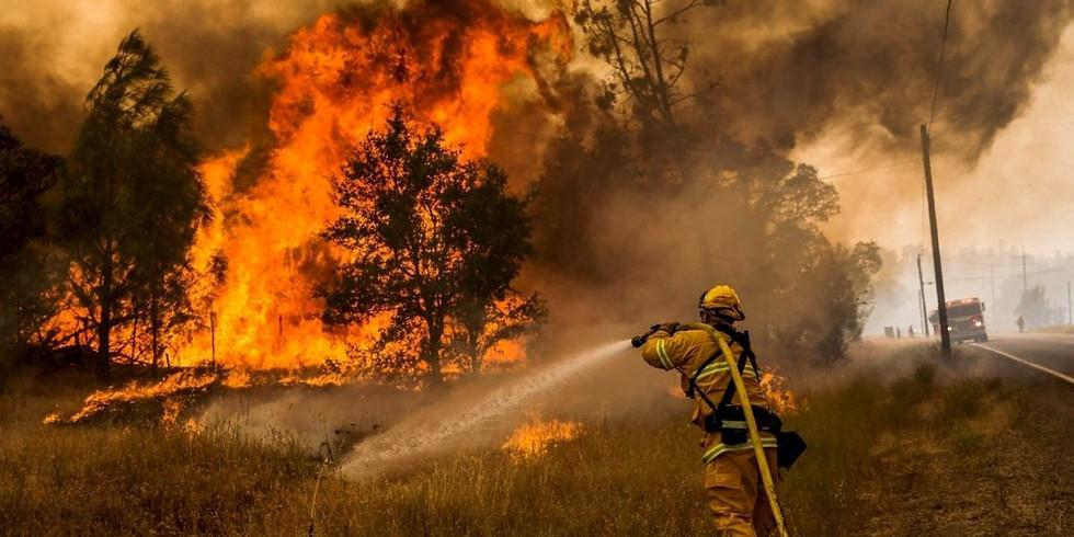 Лесные пожары: мифы и реальность