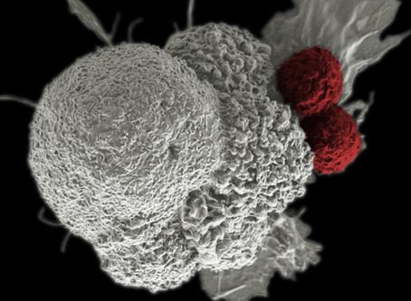 Одноклеточные геномные технологии в разработке лекарств: Завершение разговора