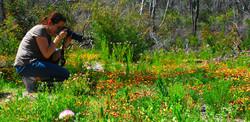Wildflowers 2013