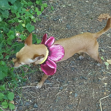 Miley modeling pink upcycled flower coll