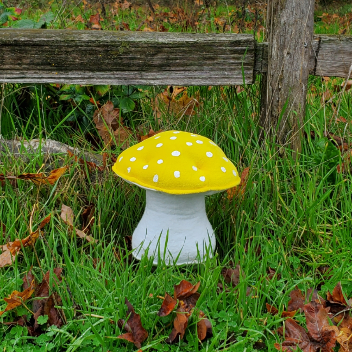 Old fence mushroom yellow amanita
