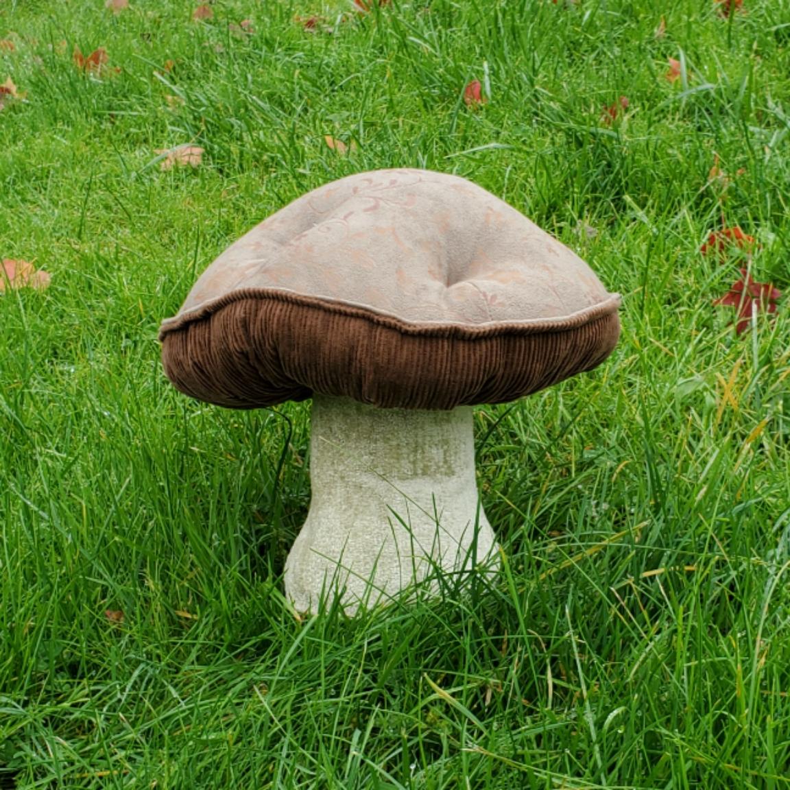 Grassy lawn mushroom instagram favorite.
