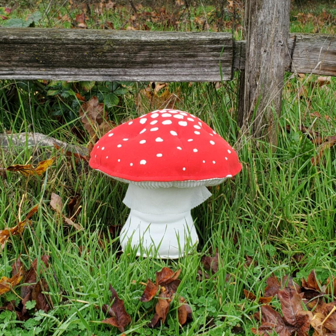 Old fence mushroom amanita