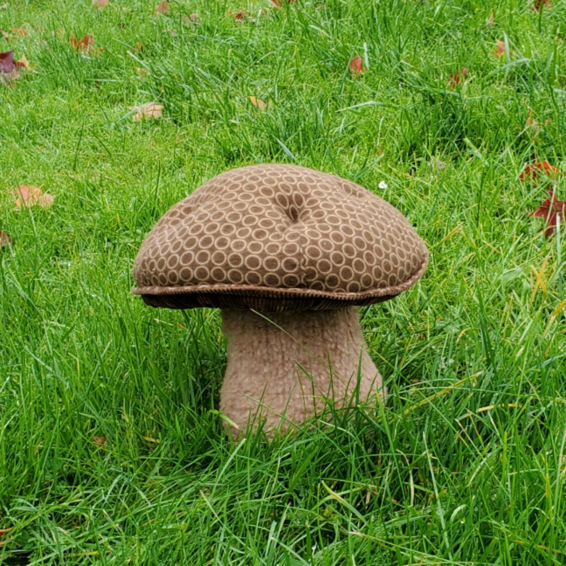 Grassy lawn mushroom brown dotty
