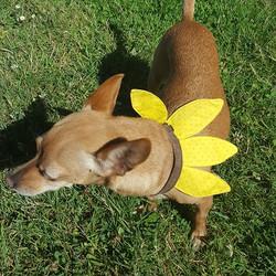 Miley wearing sunflower collar
