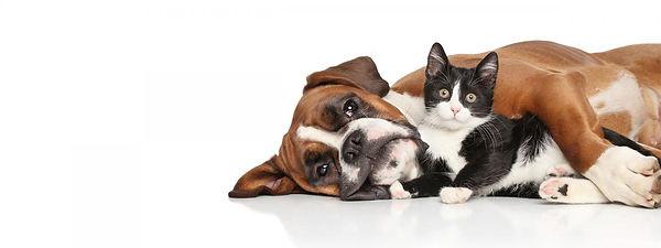 pets-health-hero-2_0.jpg