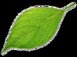 leaf-trans.png