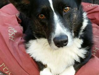 Dierenarts pleit voor Hond op kantoor
