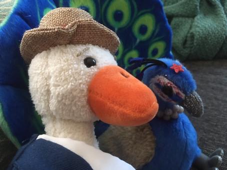 My Big Ducking Election Meltdown (Photo Edition)