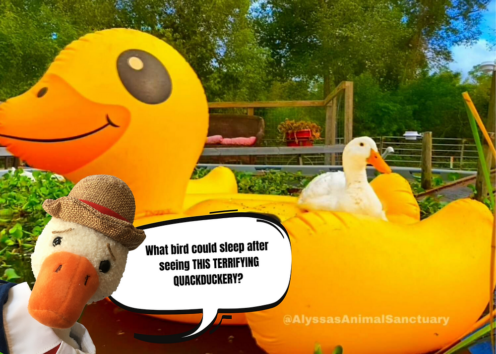 "A duck floats by on a gigantic yellow floatie in the shape of a rubber duck. In front of it, Duck T pops up his head and says, ""What bird could sleep after seeing this terrifying quackduckery?"""