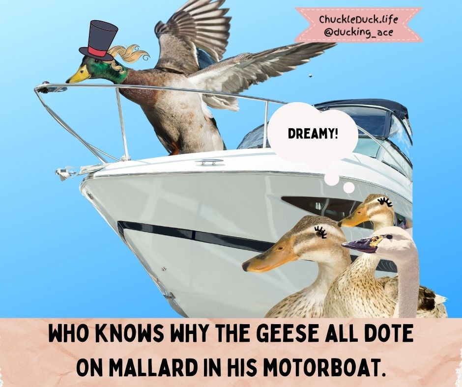 Sir Mallard Jones, a posing mallard, is on his motorboat in a top hat, his hair streaming behind him, as the geese watch with dreamy eyes.