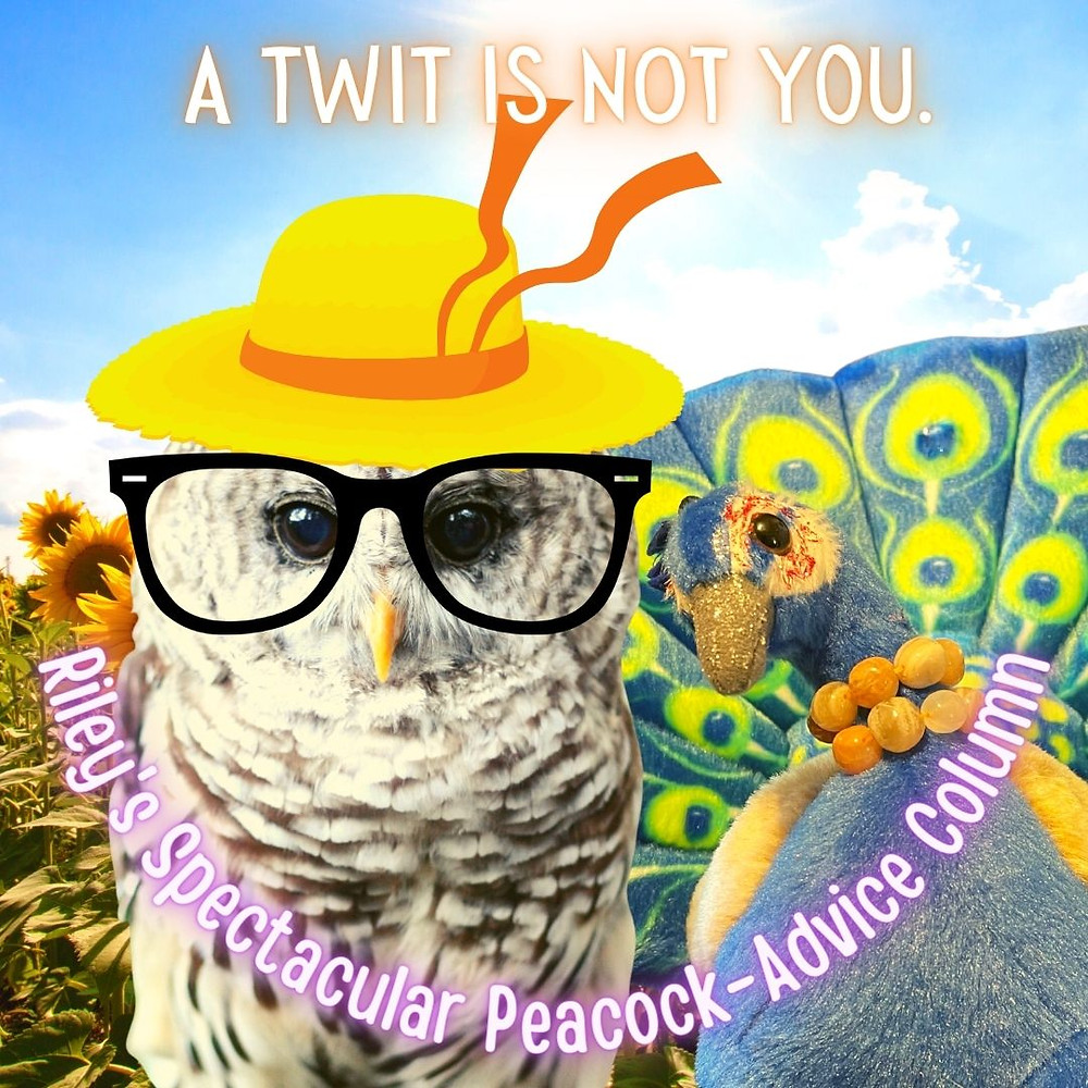 Owl Stu, who is wearing a sunhat and glasses, is in a field of sunflowers with Peacock Riley. The sun is bright in the sky.